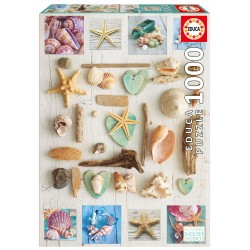 17658 Seashells Collage...