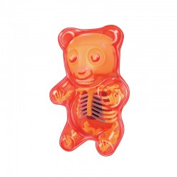 27799 Gummi Bear Anatomy...