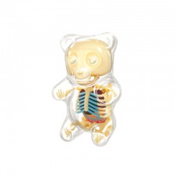#27550 Gummi Bear MINI Anatomy Clear Model