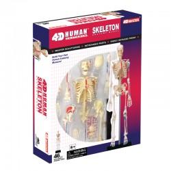 26059 4D Human Skeleton...