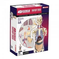 26068 4D Transparent Human...