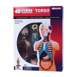 26051 4D Human Torso...
