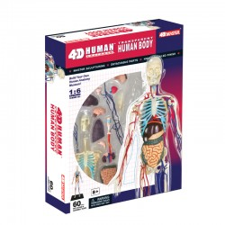 26070 4D Transparent Human...