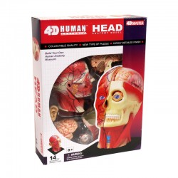 26064 4D Human Head Anatomy...