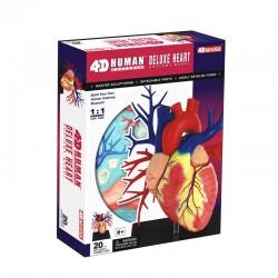 26081 4D Human Deluxe Heart...