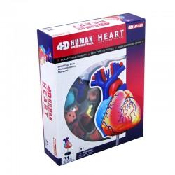 26052 4D Human Heart...