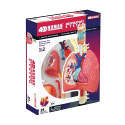 26082 4D Human Respiratory...