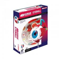 26054 4D Human Eyeball...
